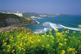 Tour Hàn Quốc Không Cần Visa - Đảo Jeju
