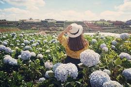 Tour Phú Thọ Đi Nha Trang - Đà Lạt