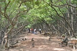 Tour Cần Giờ - Đảo Khỉ - Rừng Sát
