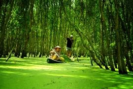 Tour Tràm Chim Tết Nguyên Đán