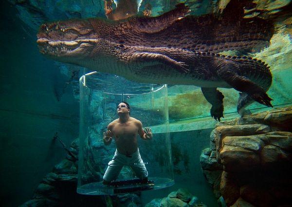 crocosaurus-cove-australia