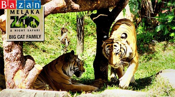 zoo-melaka-o-malaysia