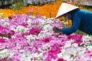 Tết về với làng hoa Phù Vân ở Hà Nam
