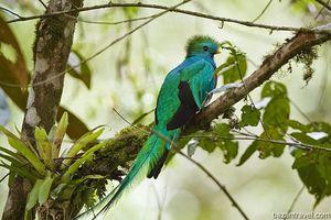 Loài chim đẹp nhất trong vùng cao nguyên và hải đảo