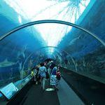 s-e-a-aquarium