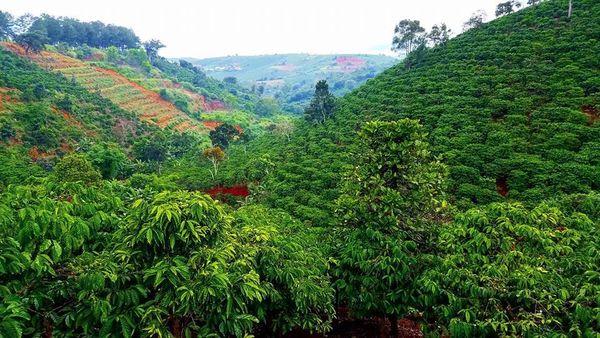 nui-rung-tai-thac-voi-bazan-travel