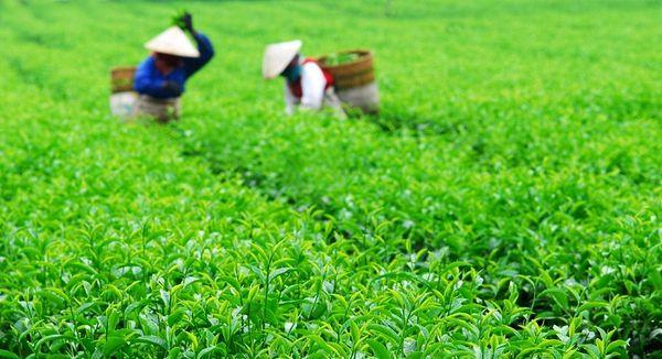 tra-bao-loc-huong-vi-pho-nui-bazan-travel