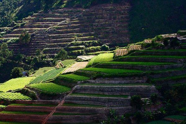 ruong-rau-bac-thang-bazan-travel-2