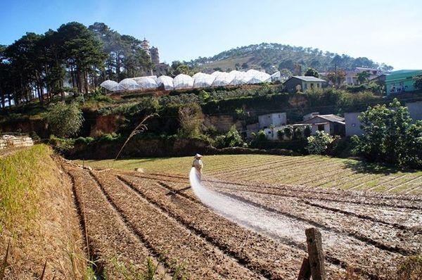 nhung-ngoi-nha-nho-tai-trai-mat-bazan-travel-1