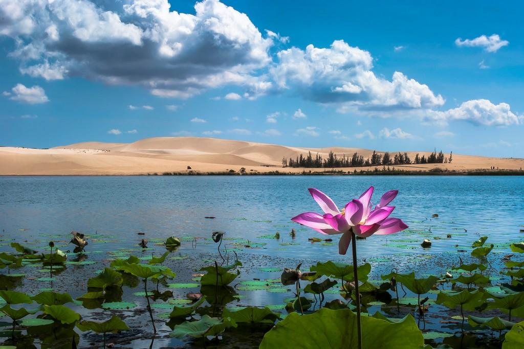 Khám phá Bàu Sen - vẻ đẹp quyến rũ của những triền cát