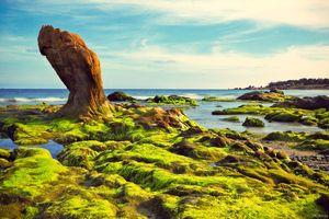 Tuyệt chiêu săn rêu tại biển Cổ Thạch