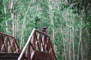 Khám phá sự đa dạng của rừng tràm nguyên sinh ở Long An