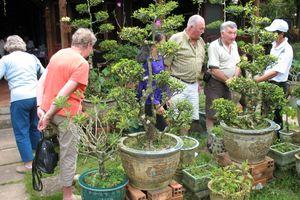 Độc đáo vườn bonsai Vĩnh Long
