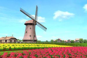 Đến Hà Lan chiêm ngưỡng những cánh đồng cối xay gió tuyệt đẹp