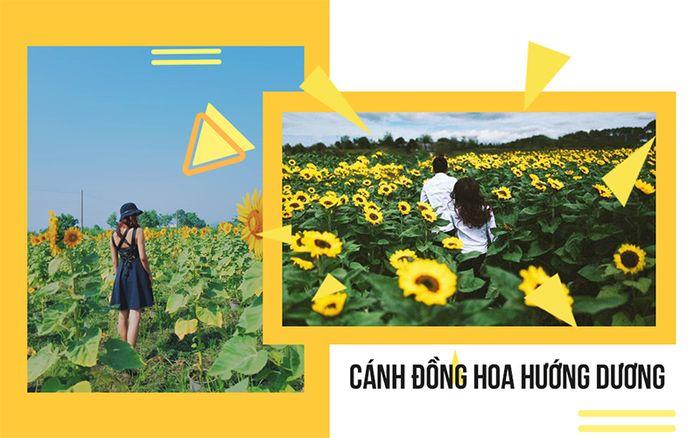 hoa-huong-duong