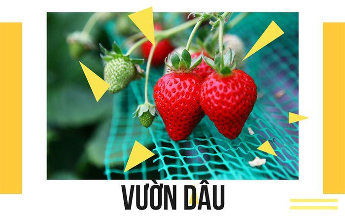 vuon-dau
