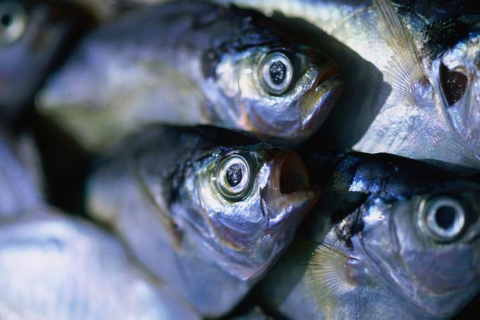 fresh-fish-from-jimbaran-beach