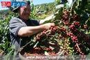Đặc sản cà phê nổi tiếng của Đắk Lắk