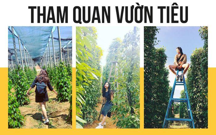 tour-phu-quoc-don-tai-san-bay-3-ngay-2-dem-vuon-tieu