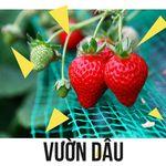 tour-da-lat-tet-duong-lich-3-ngay-2-dem-vuon-dau