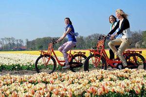 Dịch vụ tư vấn du học Hà Lan