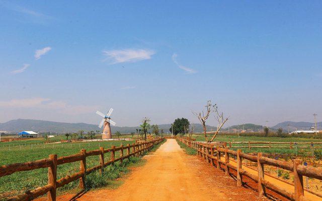 vinamilk-organic-milk-farm