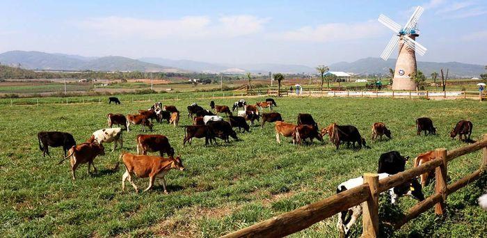 da-lat-milk-farm