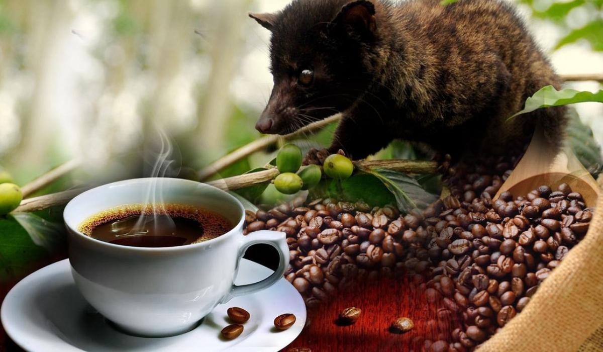 Cà phê Chồn Đà Lạt, thương hiệu Tây Nguyên