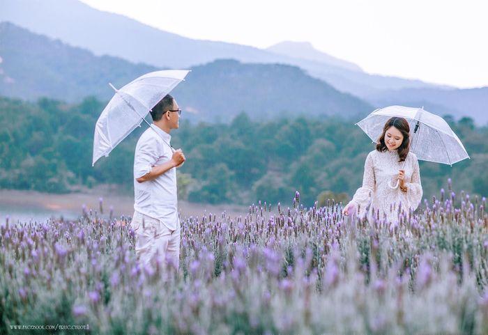 hoa-lavender-da-lat-1