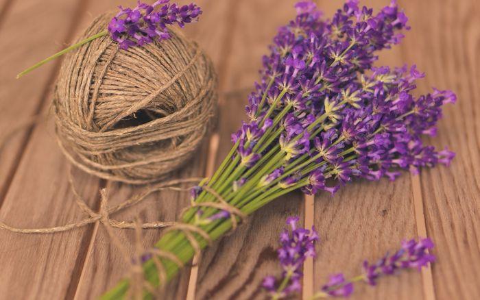 hoa-lavender-da-lat-4