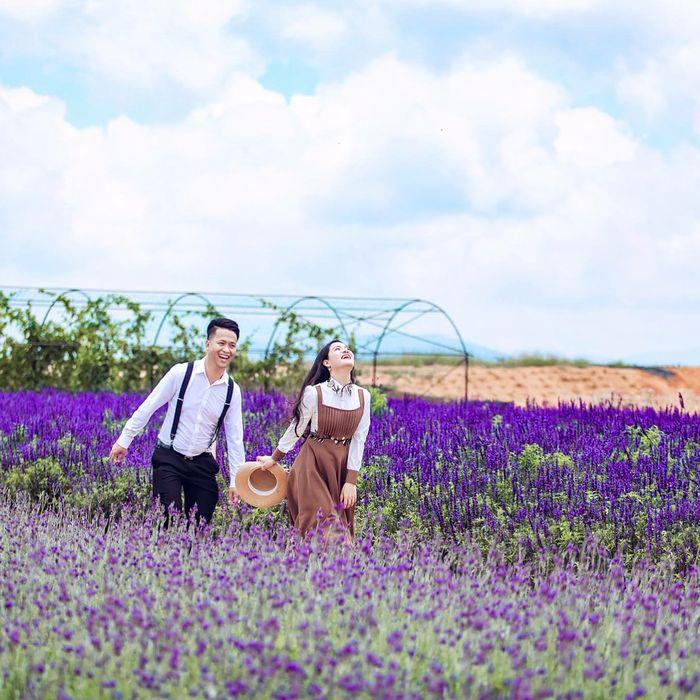 hoa-lavender-da-lat-9