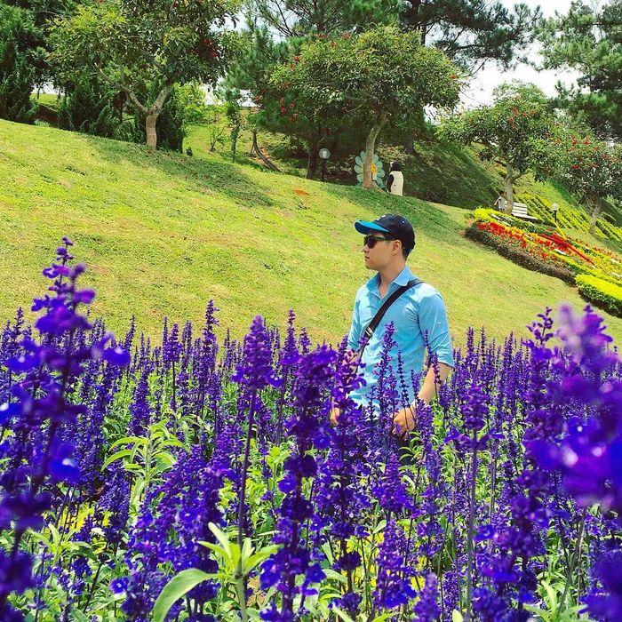 hoa-lavender-da-lat-7