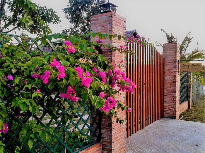 spring-garden-homestay