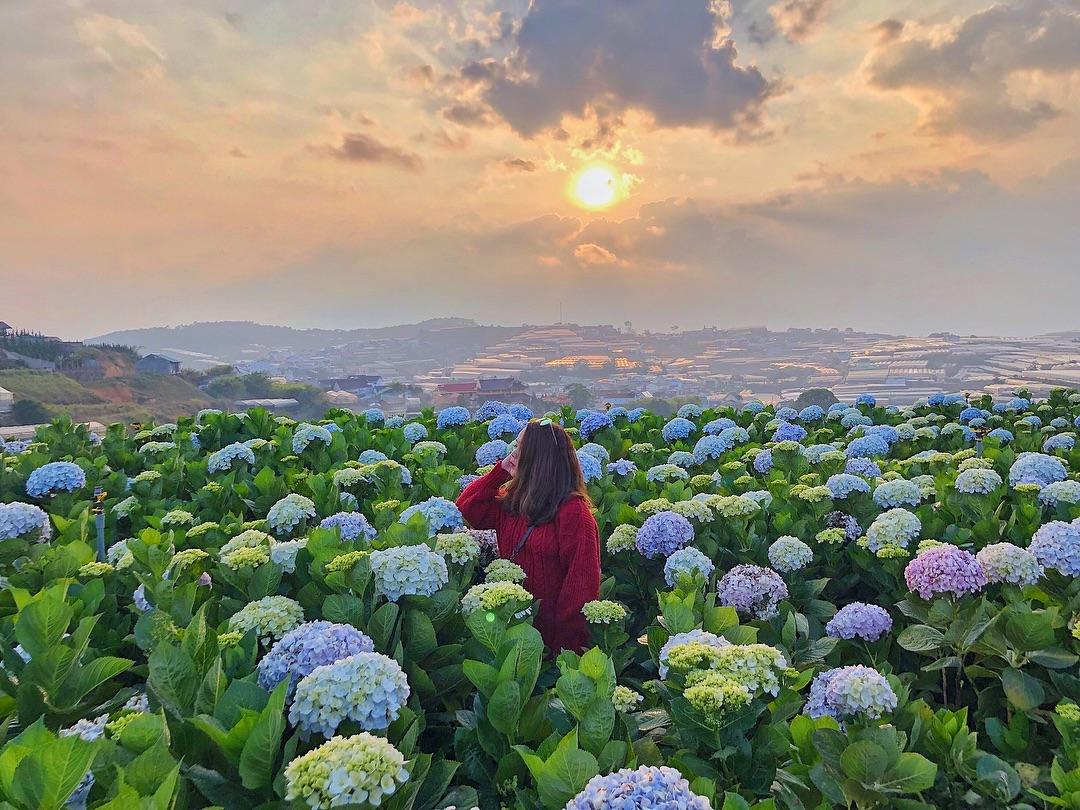 Hướng dẫn đường đến 3 vườn hoa cẩm tú cầu đẹp nhất Đà Lạt