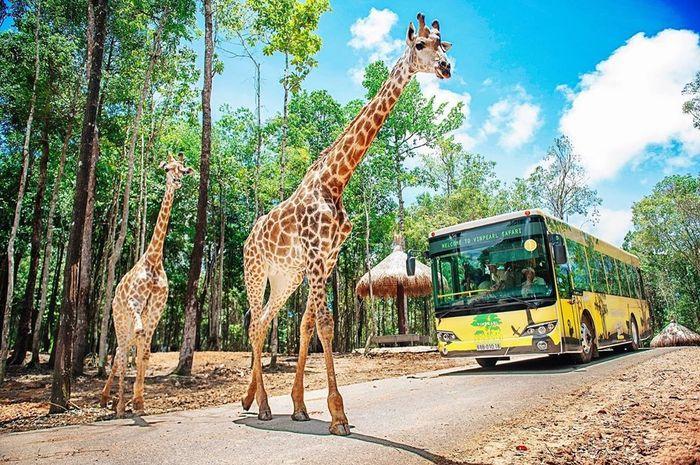 vinpearl-land-safari-phu-quoc