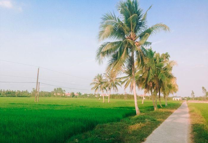 ruong-vinh-long