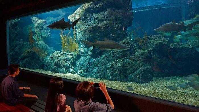 shark-shipwreck-sea-life
