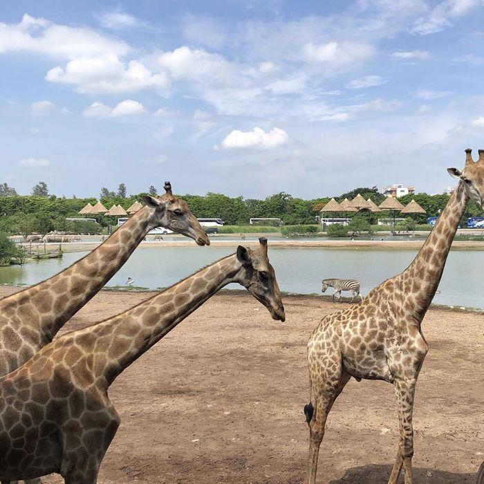 safari-world-bangkok5