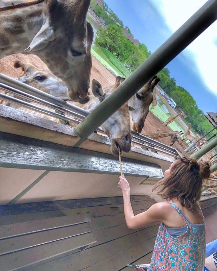 safari-world-bangkok2