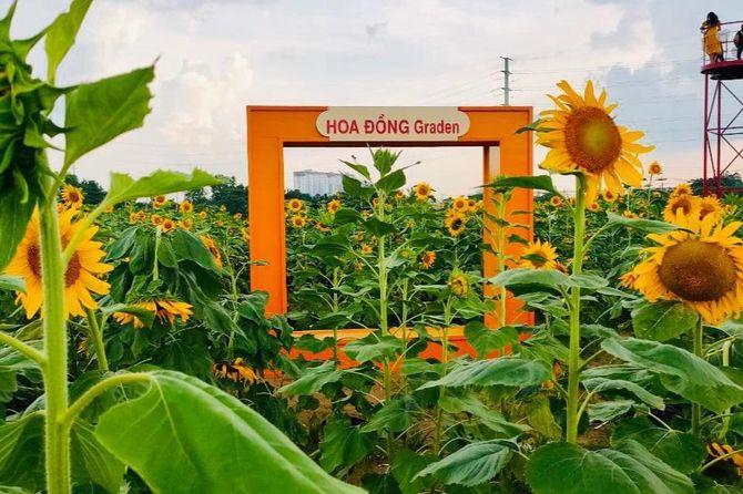hoa-dong-garden9