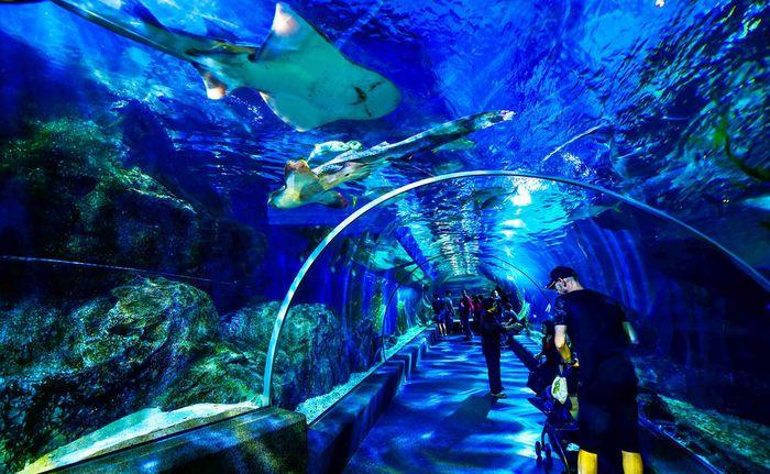 sea-life-bangkok