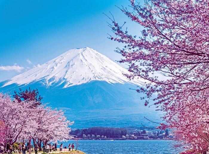 núi phú sỹ nhật bản mùa xuân