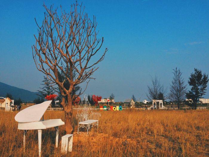 thuan-phuoc-field
