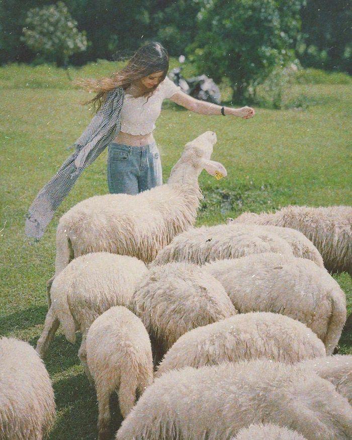 Đồi cừu Đồng Nai