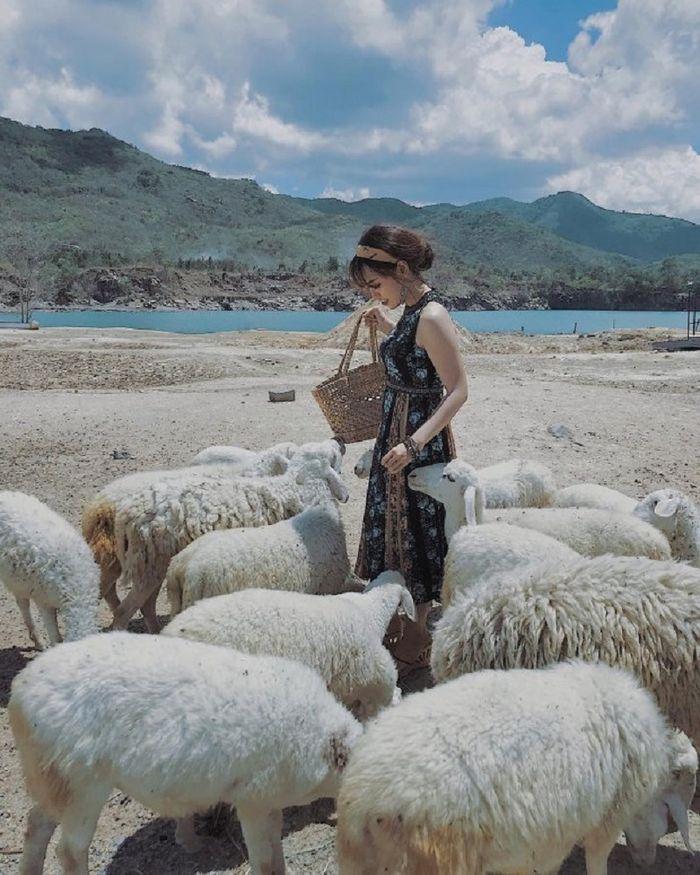 Trại cừu Đồng Nai