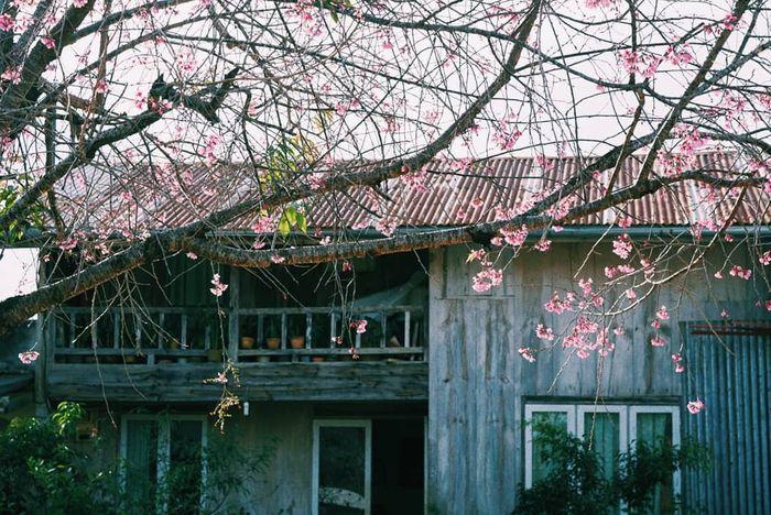 Đà Lạt mùa xuân