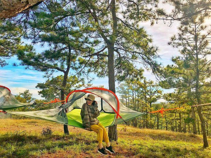 Trải nghiệm cắm trại bên rừng thông