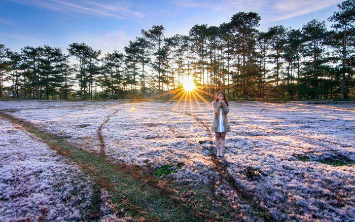 Cản đẹp Đà Lạt đồi cỏ hồng