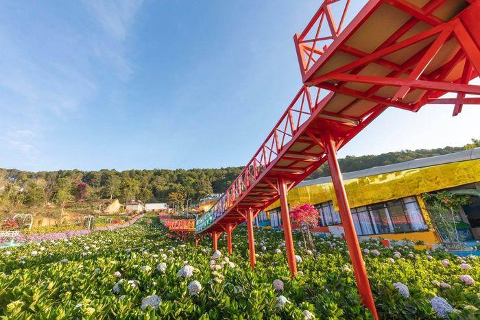 Vườn cẩm tú cầu ở khu du lịch