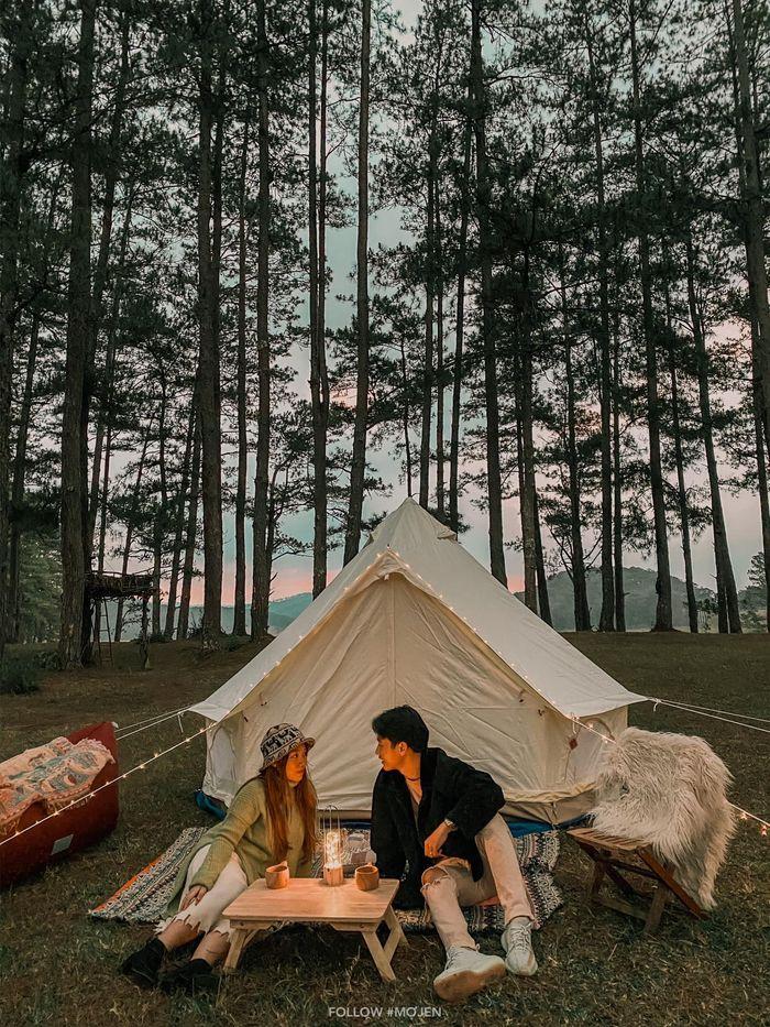 Cắm trại trong rừng thông